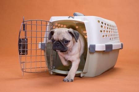 pets-travel