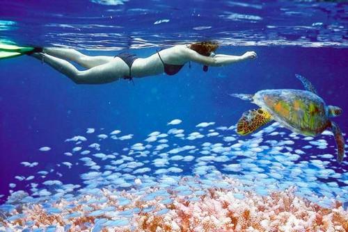snorkel-en-la-gran-barrera